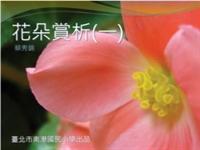 花朵賞析(一)