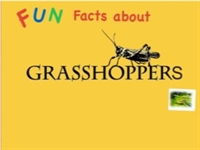 Fun Facts About Grasshoppers