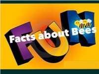 Fun Facts about Bees