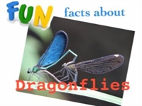 Fun Facts About Dragonflies