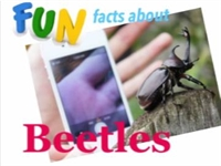 Fun Facts About Beetles