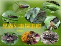 昆蟲列車探索趣
