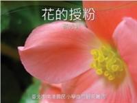花朵的授粉